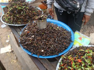 Insecten in Seam Reap