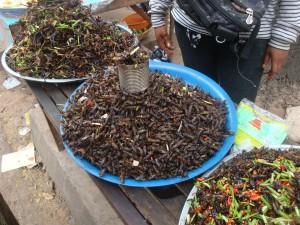 Insecten in Seam Reap
